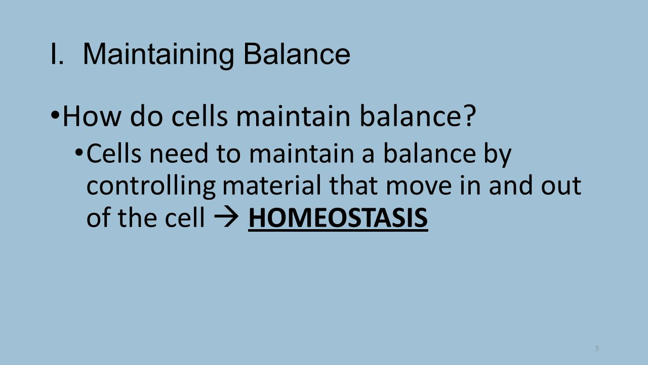 4 things cells do to maintain homeostasis - How Do Cells Maintain Balance