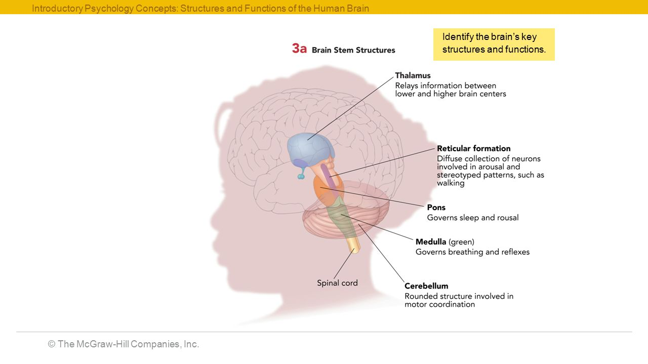 The McGraw-Hill Companies, Inc. Introductory Psychology Concepts ...