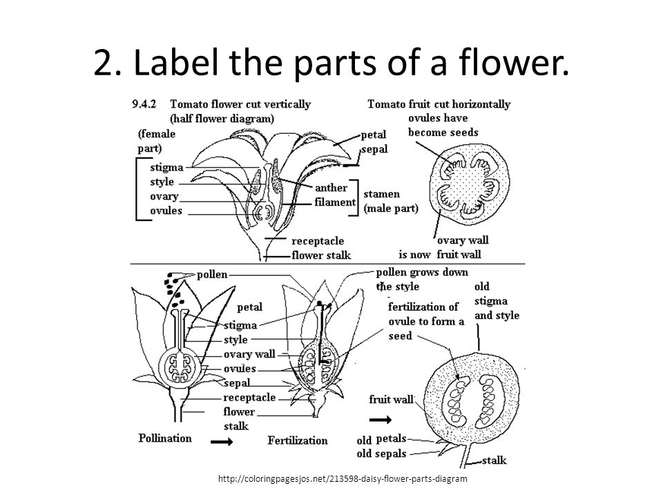 Plant reproduction ppt video online download label the parts of a flower ccuart