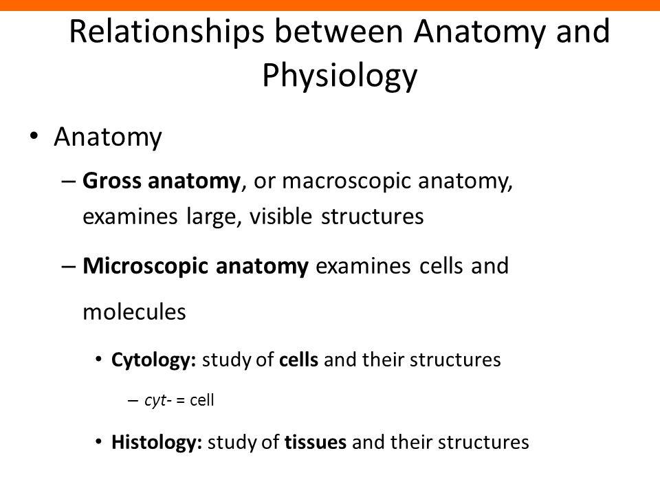 Groß Difference Between Anatomy And Physiology Bilder - Menschliche ...