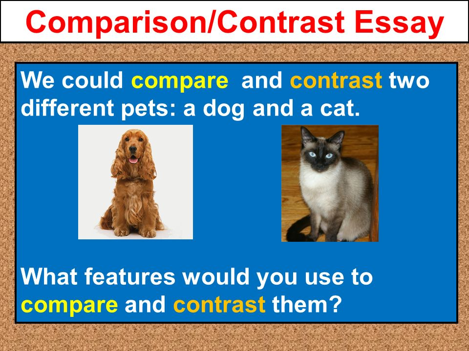 cats and dogs what do you essay Check out our top free essays on cats vs dogs to help you write your own essay.