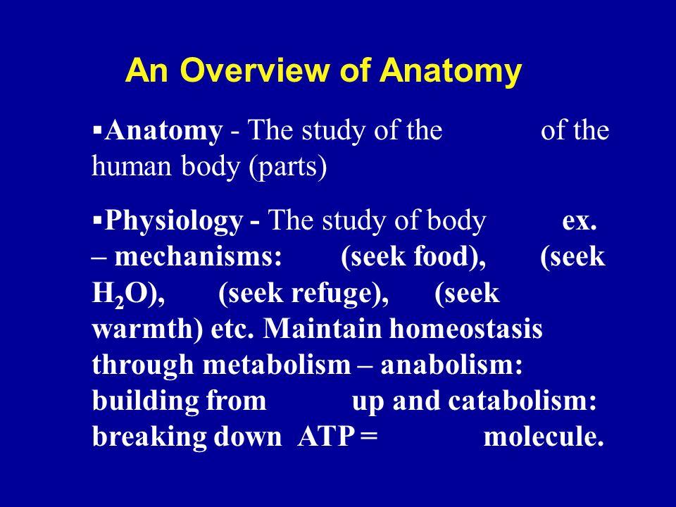 Anatomy & Physiology. BIOLOGY – BOTANY – ZOOLOGY – MORPHOLOGY ...