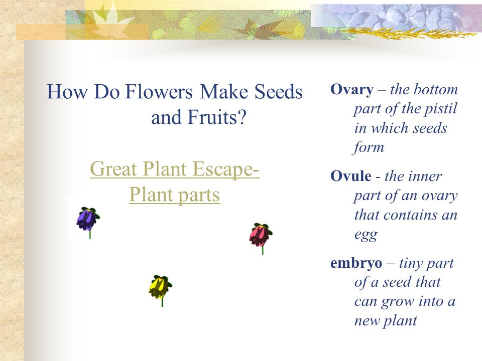 PLANTS: form and function Chapters 18 & 19. What is a Plant? Multi ...
