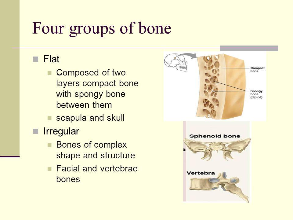 skeletal system. bones of the handbones of the pelvis. - ppt download, Sphenoid