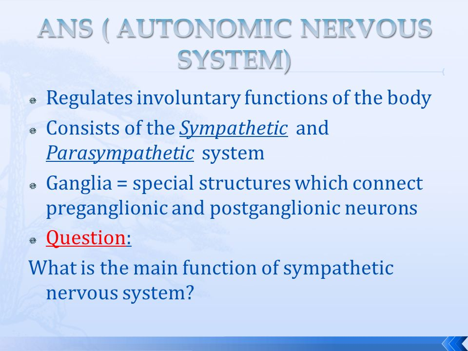 essay questions on autonomic nervous system