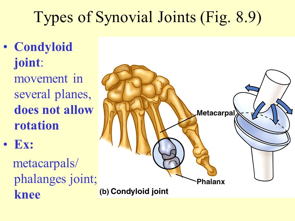 chapter 8 joints of the skeletal system powerpoint presentation to, Cephalic Vein