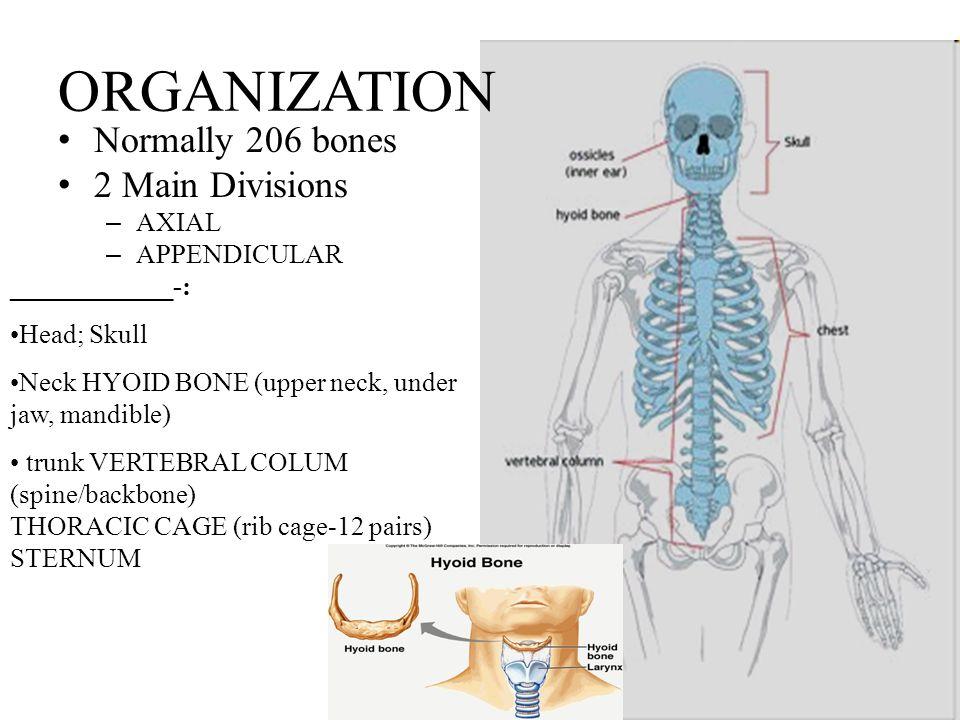Skeletal System Function Of Bones Body Muscles Pull On Bones