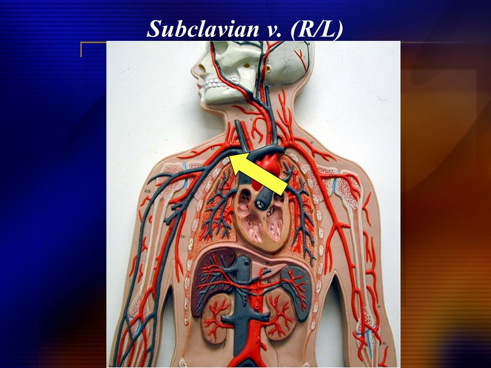 Subclavian v. (R/L)