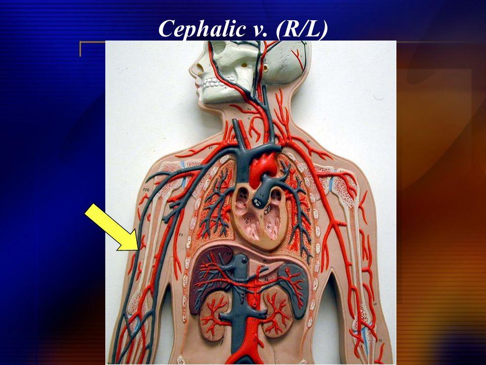Cephalic v. (R/L)