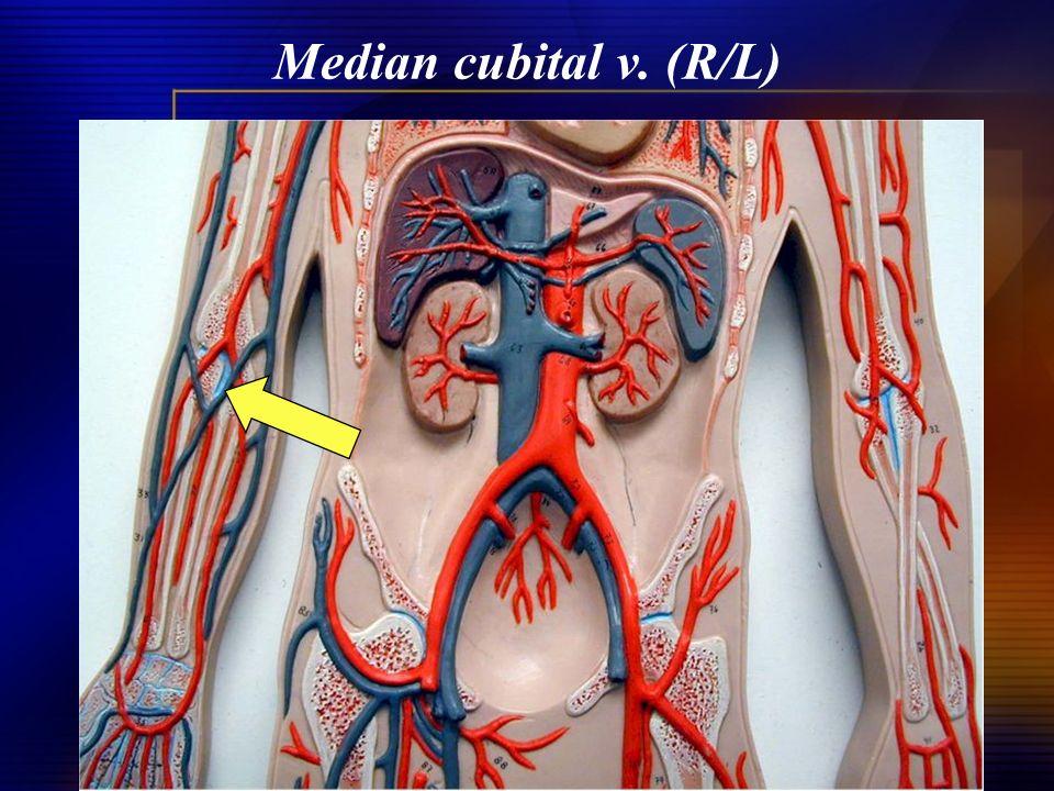 Median cubital v. (R/L)