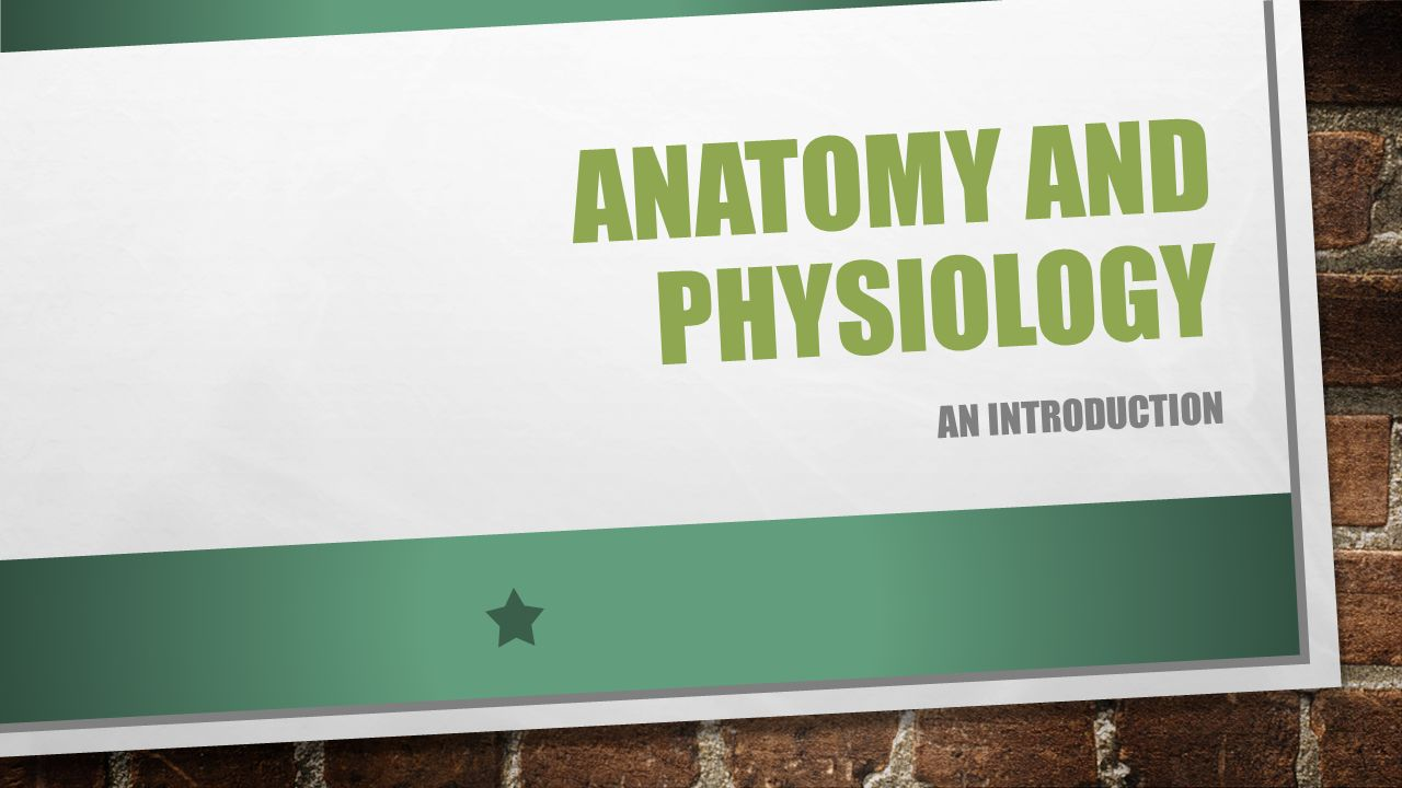 Schön Anatomy And Physiology Prefixes And Suffixes List Galerie ...