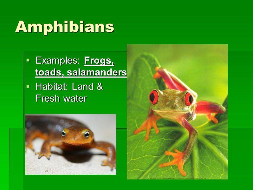 Amphibian & Reptile Notes Chapter 30 & 31. Amphibians  Examples ...
