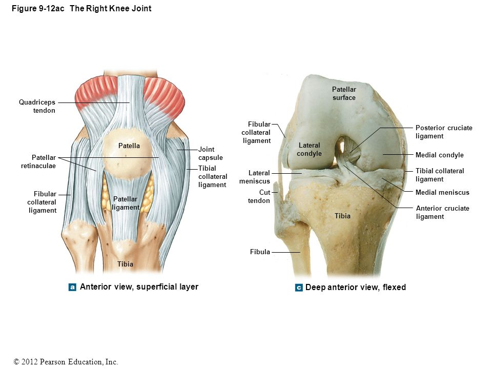 Design Of A Realistic Knee Model To Assess A Surgeons Ability To