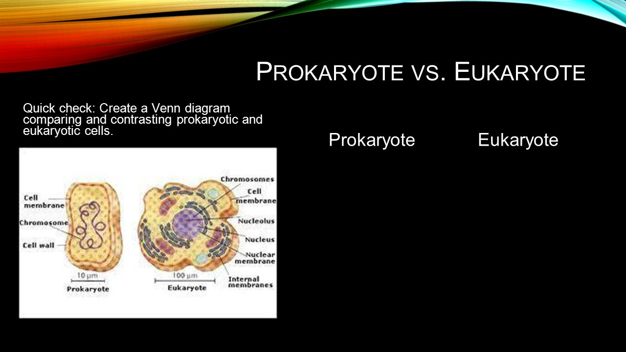 Prokaryotic vs eukaryotic venn diagram hid card reader wiring c ells types structures transport energy and differentiation slide 2 10767420 prokaryotic vs eukaryotic venn diagram prokaryotic vs eukaryotic venn diagram pooptronica Image collections
