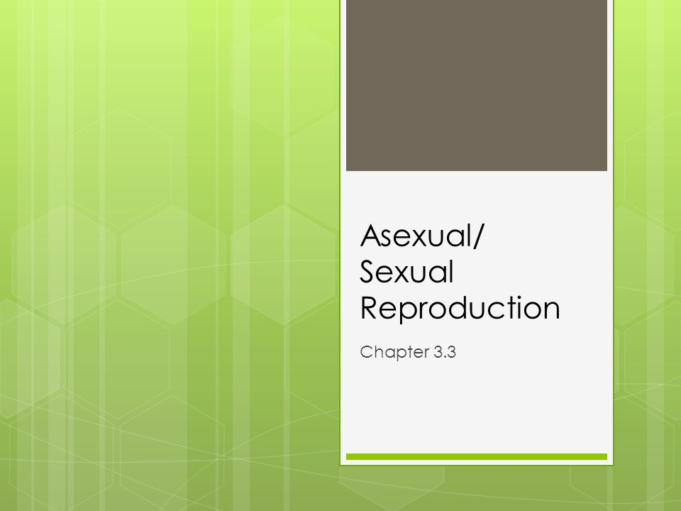 Asexual Sexual Reproduction Chapter 33 Warmup 34 Behavior – Asexual Vs Sexual Reproduction Worksheet