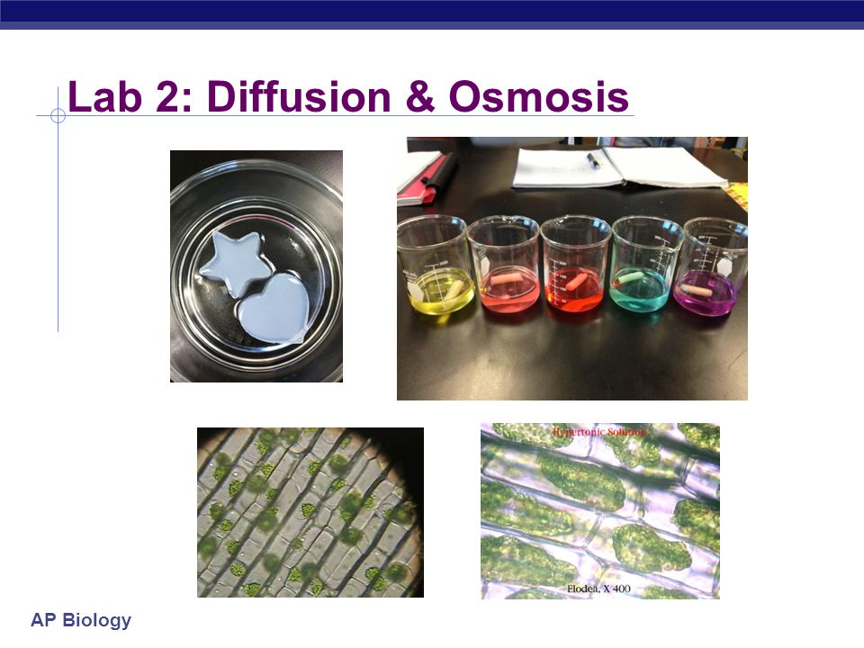 lab 7 osmosis He then explains the concepts behind the osmosis lab and how potatoes are affected by increasing sucrose molarity education resources diffusion & osmosis lab review.