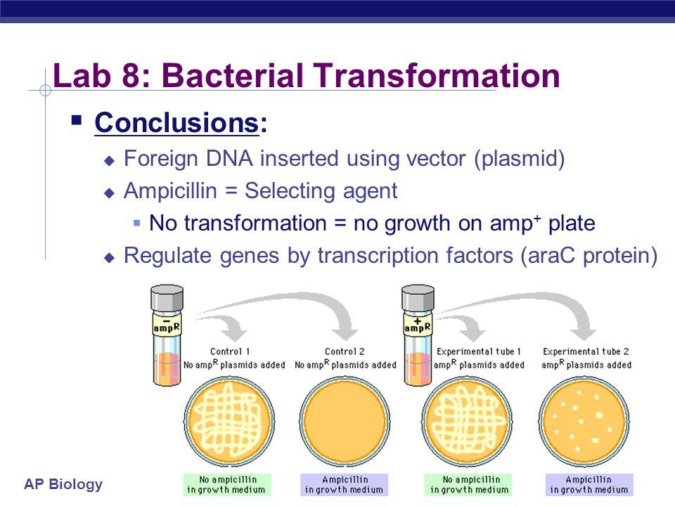 biology lab report bacteria