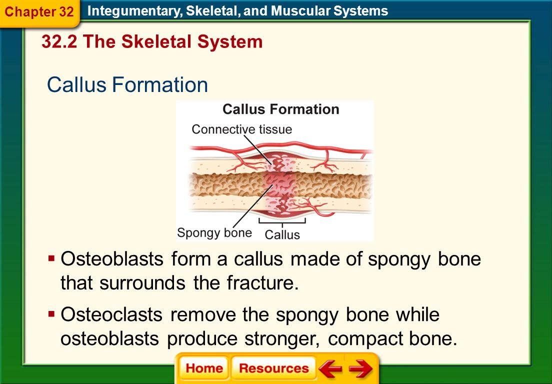 skeletal muscular and integumentary system Quick answer the skeletal system works constantly with the muscular system, and the circulatory system, endocrine system and integumentary system also have interactions with it the skeletal system provides vital support and protection for all the other systems of the human body.