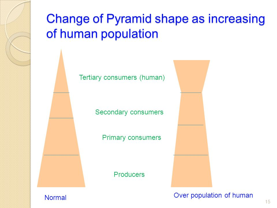 Change of Pyramid shape as increasing of human population 15 Producers Primary consumers Secondary consumers Tertiary consumers (human) Normal Over population of human