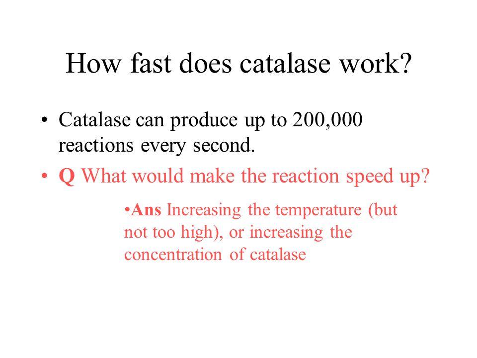 What temperature does catalase denature at?