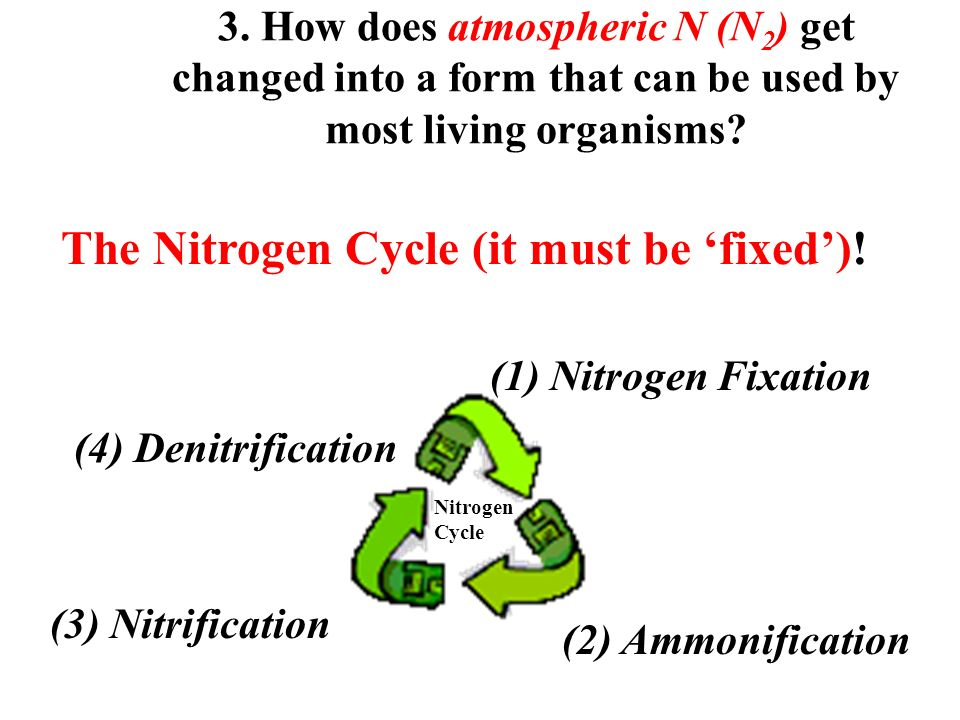 1. What is Nitrogen?  N makes up about 78% of our atmosphere ...