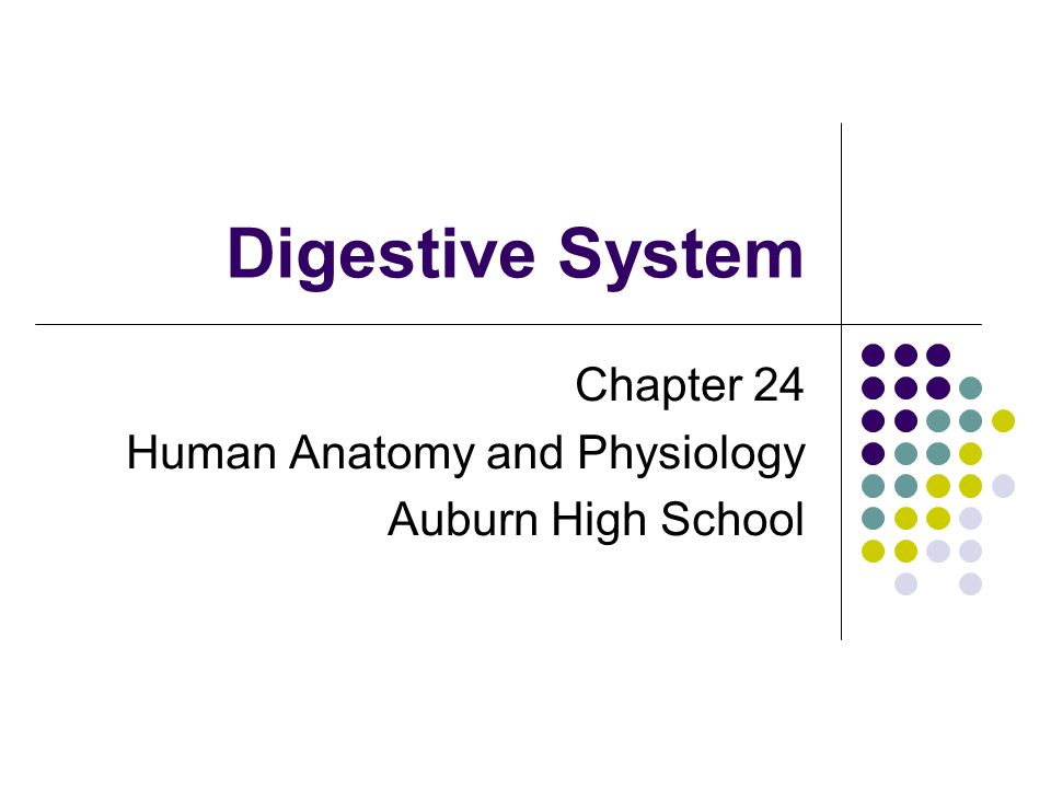 Digestive System Chapter 24 Human Anatomy and Physiology Auburn High ...