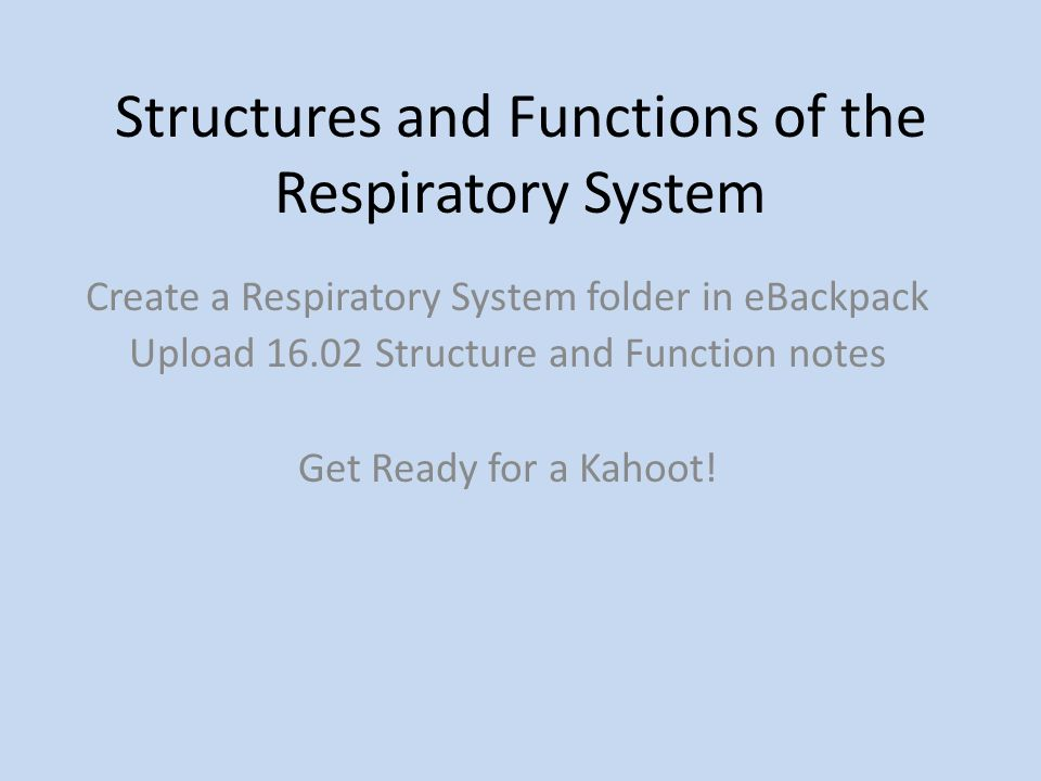 Structures and Functions of the Respiratory System Create a ...
