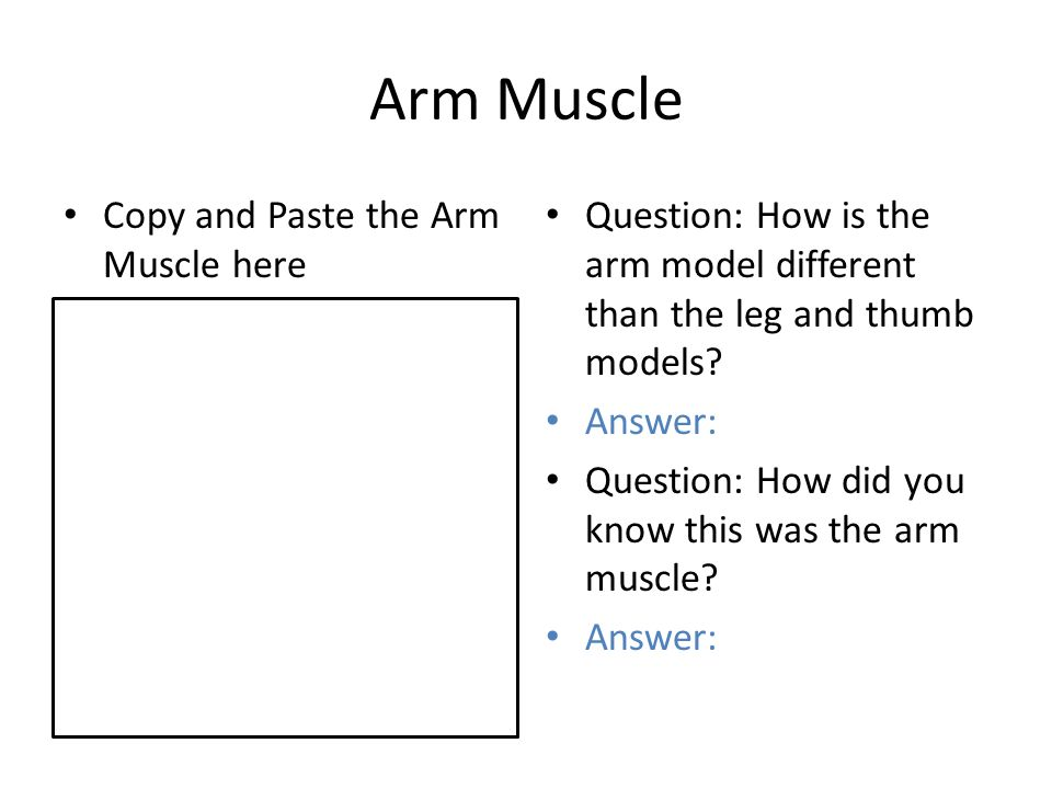 human body unit type your name here. models of muscles use these, Muscles