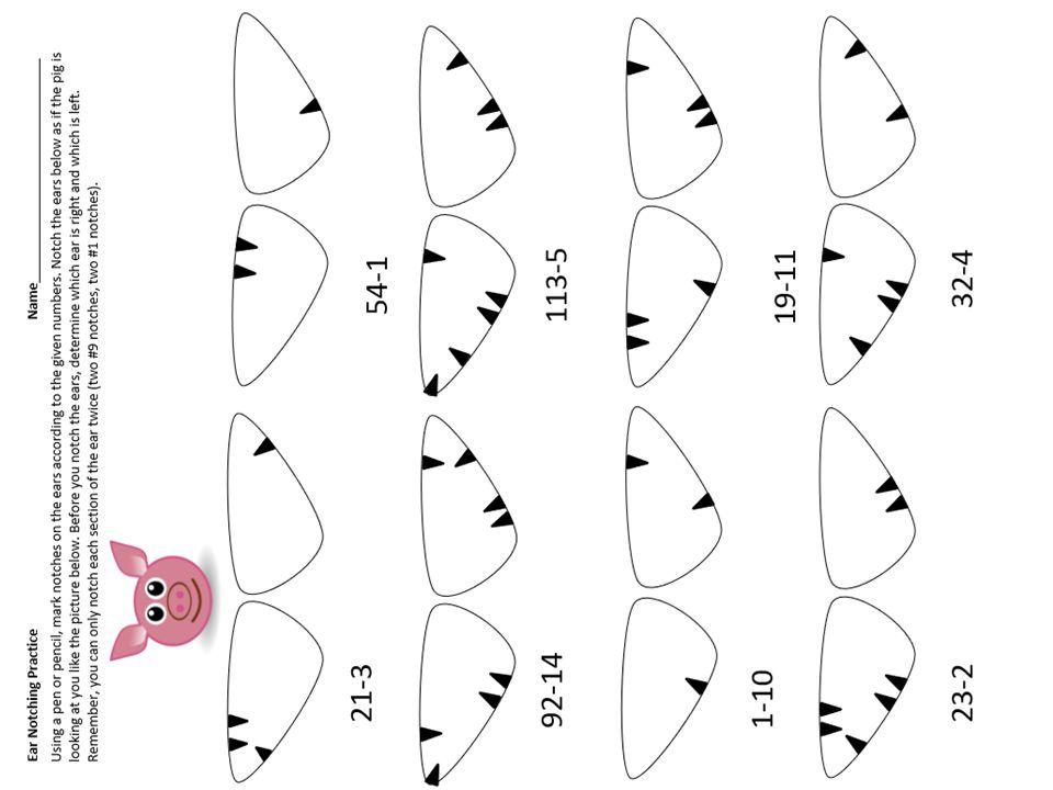 Pig Ear Notching Worksheet Images Worksheet For Kids Maths Printing