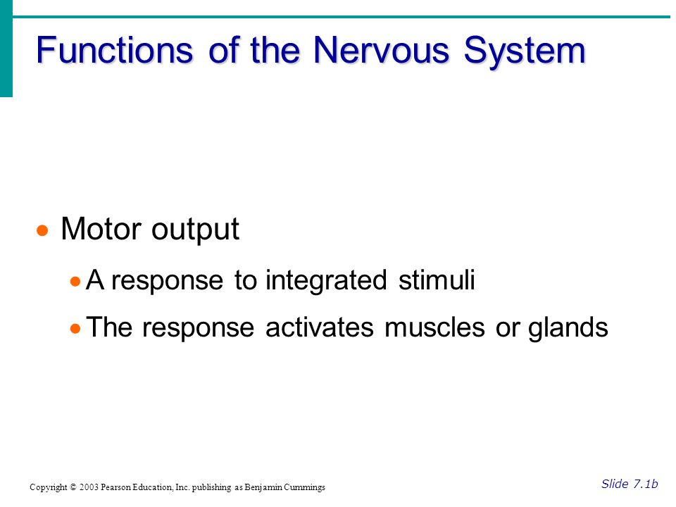 Functions of the Nervous System Slide 7.1b Copyright © 2003 Pearson Education, Inc.