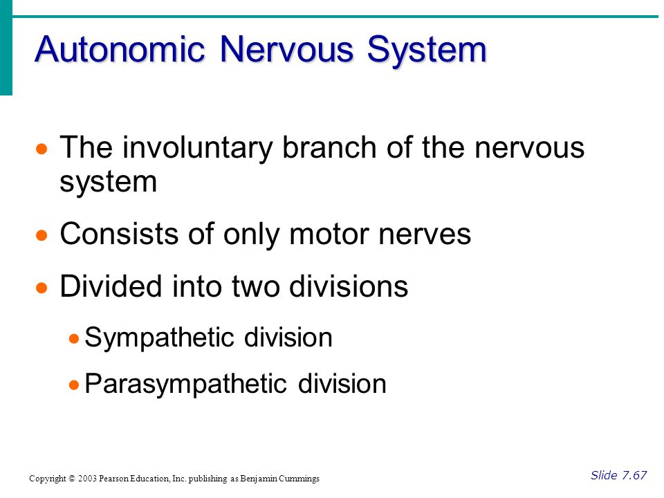 Autonomic Nervous System Slide 7.67 Copyright © 2003 Pearson Education, Inc.