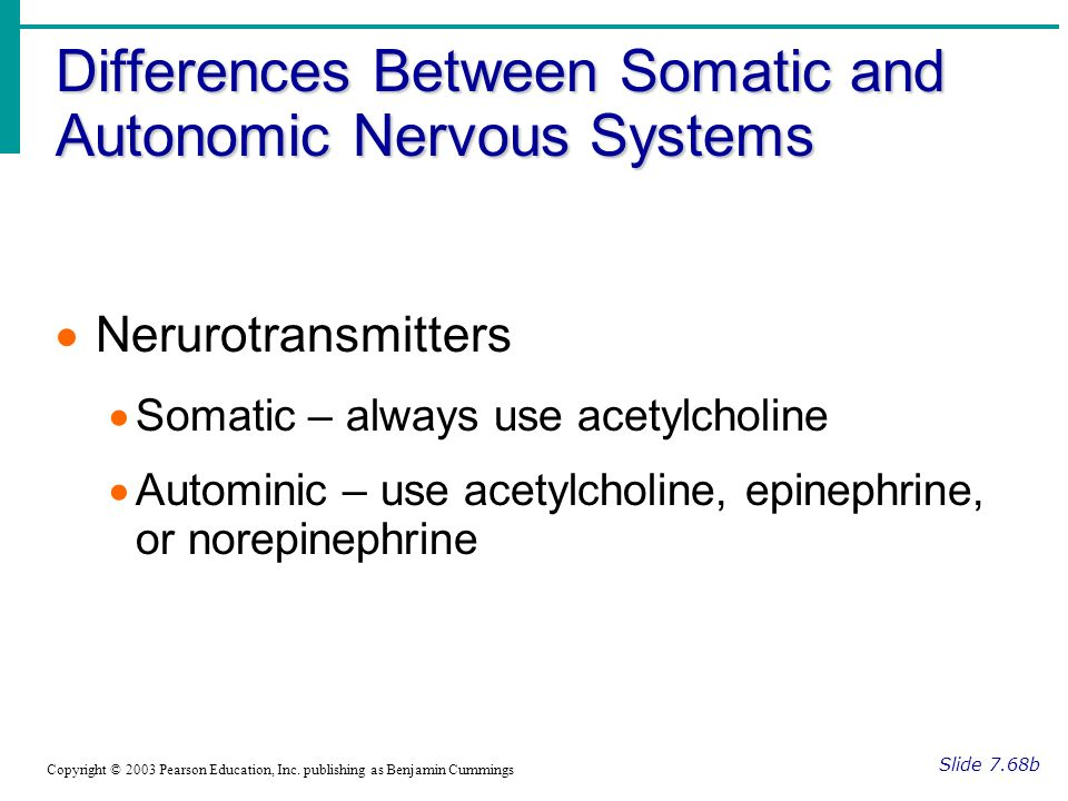 Differences Between Somatic and Autonomic Nervous Systems Slide 7.68b Copyright © 2003 Pearson Education, Inc.
