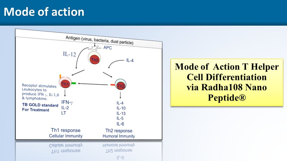 21 Mode of action Mode of Action T Helper Cell Differentiation via Radha108 Nano Peptide® Mode of Action T Helper Cell Differentiation via Radha108 Nano Peptide®