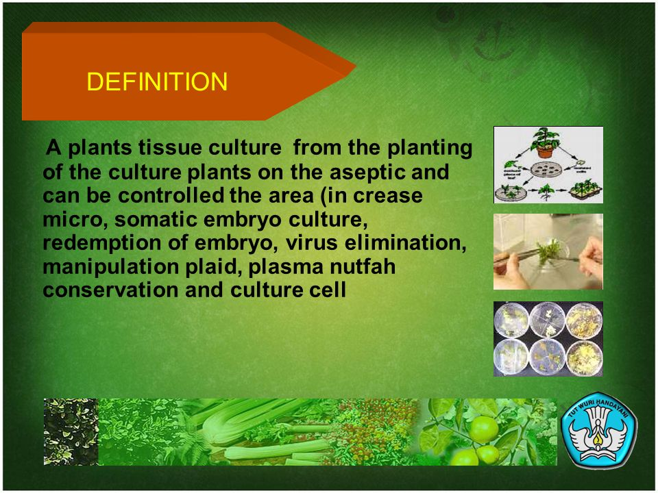 disadvantages of tissue culture Tissue culture is a biological research method in which parts of a plant are grown in a prepared medium tissue culture has both positive and negative aspects plant tissue culture experiments involve high cost because of the expensive machinery required.