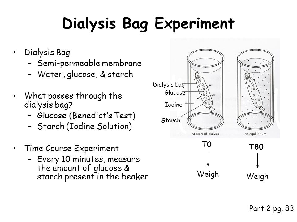 osmosis experiment plan In this biology classroom lab  and a way to measure the mass of the bears the activity is a great intro lab into the concept of osmosis and diffusion.