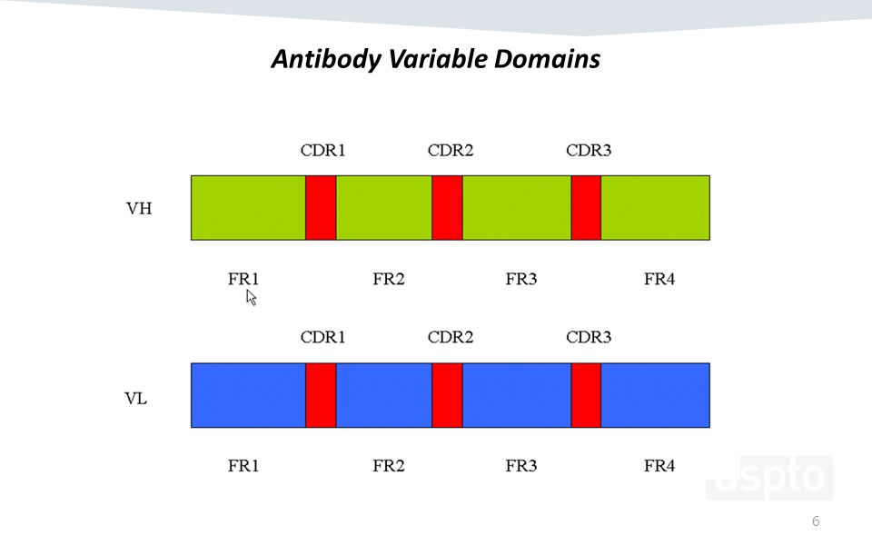 Antibody Variable Domains 6