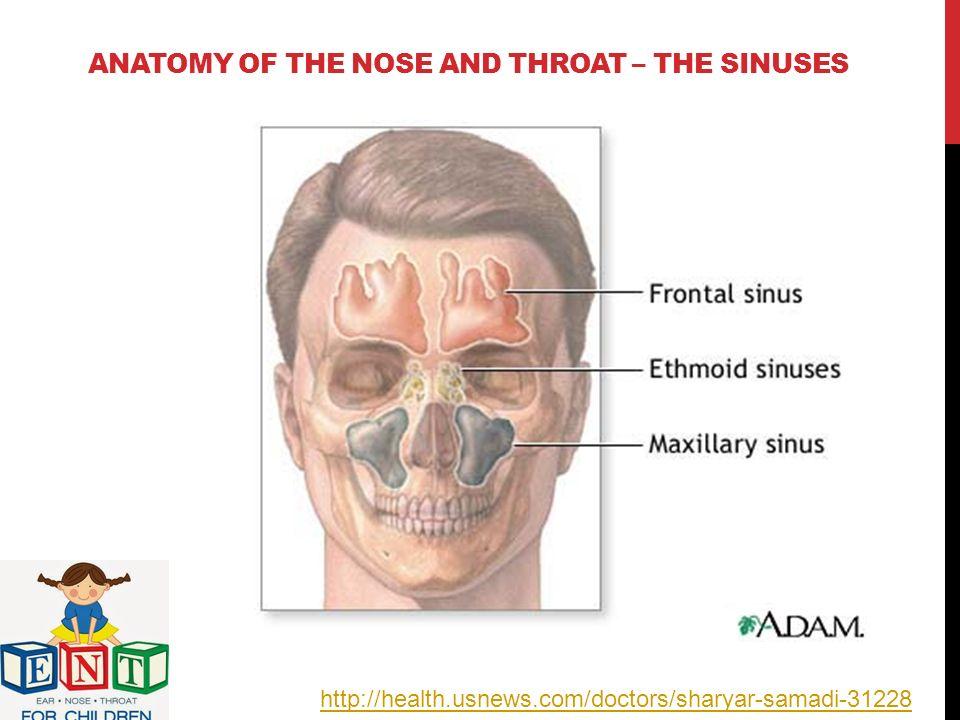 Attractive Frontal Sinus Anatomy Illustration - Anatomy Ideas ...