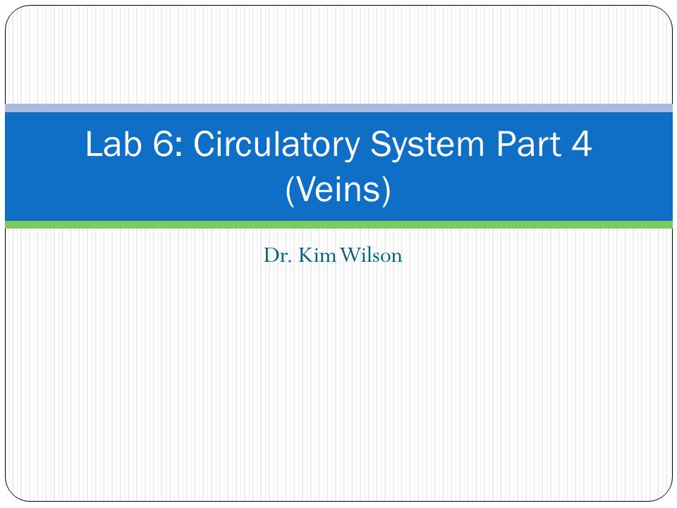 Dr. Kim Wilson Lab 6: Circulatory System Part 4 (Veins)