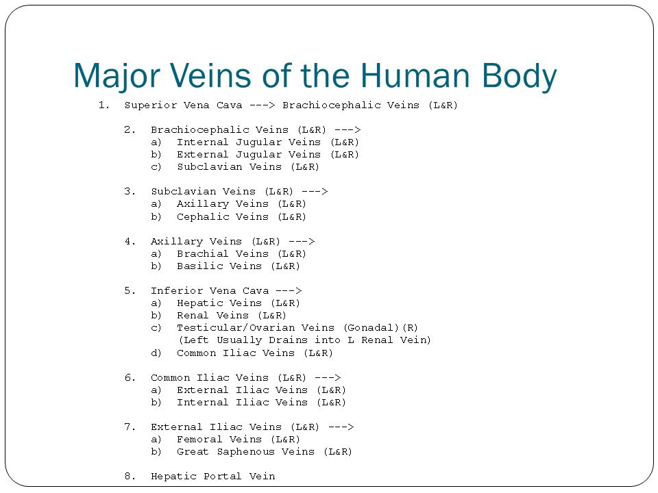 Major Veins of the Human Body