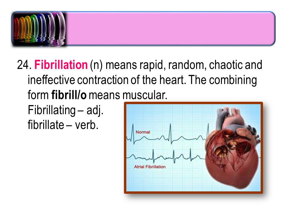 Foundation year Cardiovascular system T :sanaa abdel hamed. - ppt ...