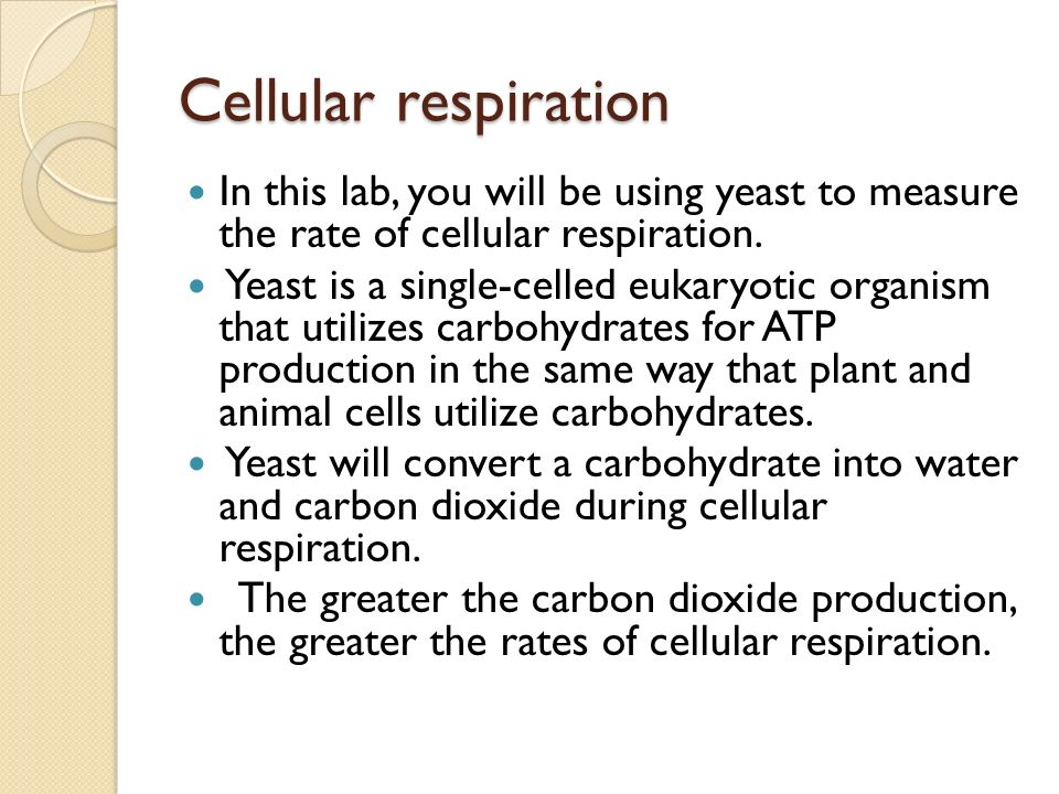 compare the rate of respiring yeast in boiled and unboiled water