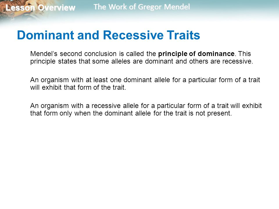 Lesson Overview Lesson Overview The Work of Gregor Mendel Lesson – Chapter 10 Mendel and Meiosis Worksheet Answers