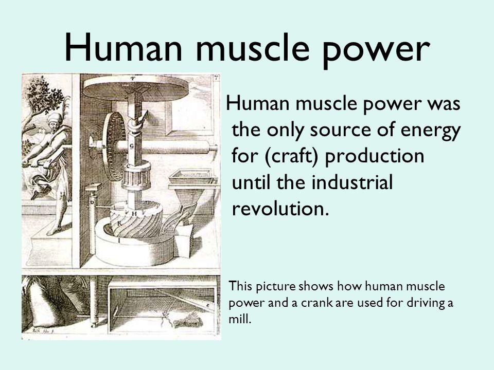 human muscle power – citybeauty, Muscles