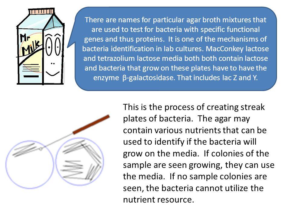 Regulation Of Gene Expression In Prokaryotes Homework For Kids - image 10