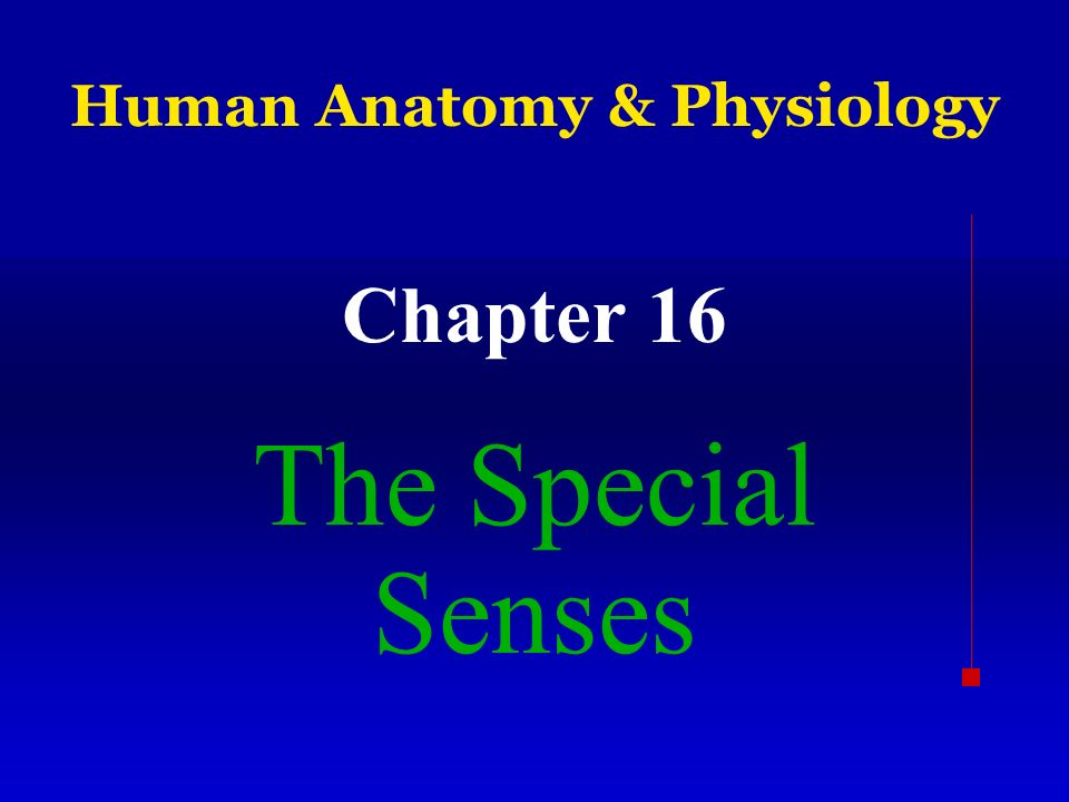 Human Anatomy & Physiology Chapter 16 The Special Senses. - ppt download
