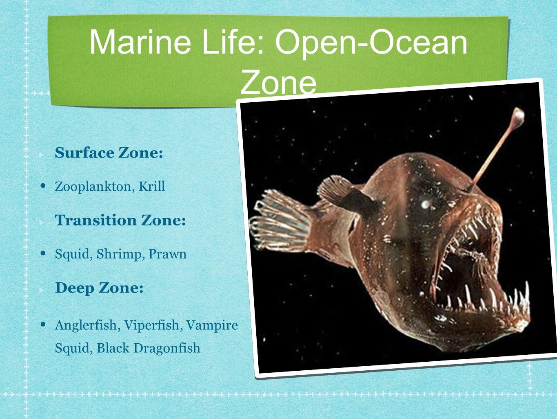 Marine Life: Open-Ocean Zone Surface Zone: Zooplankton, Krill Transition Zone: Squid, Shrimp, Prawn Deep Zone: Anglerfish, Viperfish, Vampire Squid, Black Dragonfish