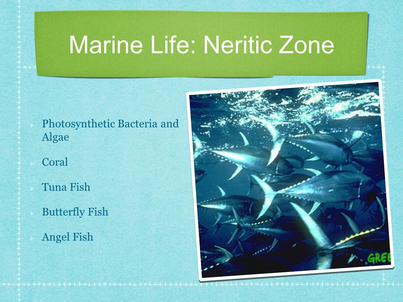 Marine Life: Neritic Zone Photosynthetic Bacteria and Algae Coral Tuna Fish Butterfly Fish Angel Fish