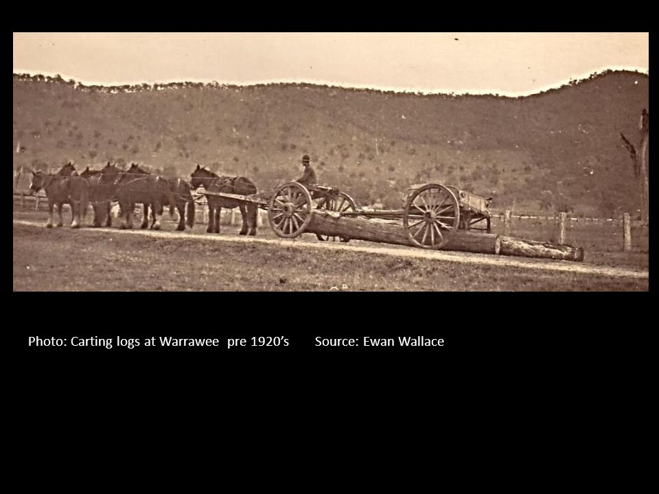 Photo: Carting logs at Warrawee pre 1920's Source: Ewan Wallace