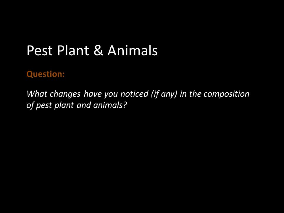 Pest Plant & Animals Question: What changes have you noticed (if any) in the composition of pest plant and animals