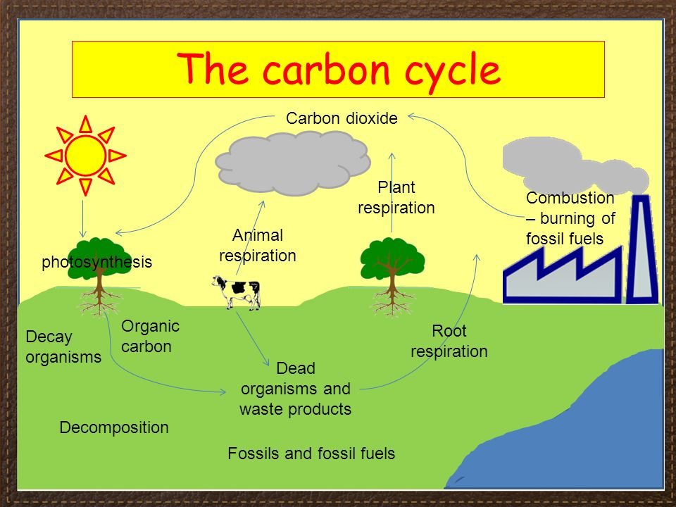 Carbon cycle including combustion diagram wiring diagram igcse biology section 4 lesson 3 content section 4 ecology and the carbon cycle steps carbon cycle including combustion diagram ccuart Choice Image
